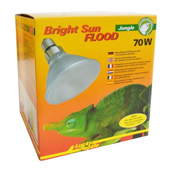 Bright Sun FLOOD Jungle