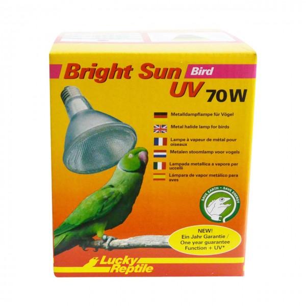 Bright Sun Bird