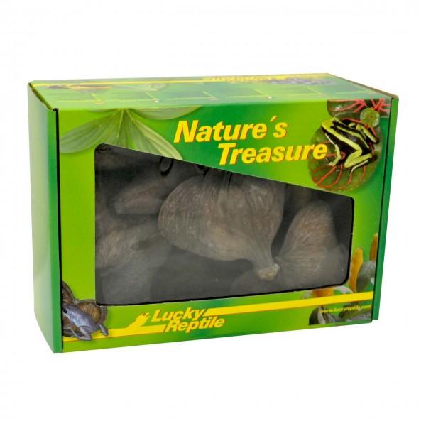 Lucky Reptile Nature`s Treasure