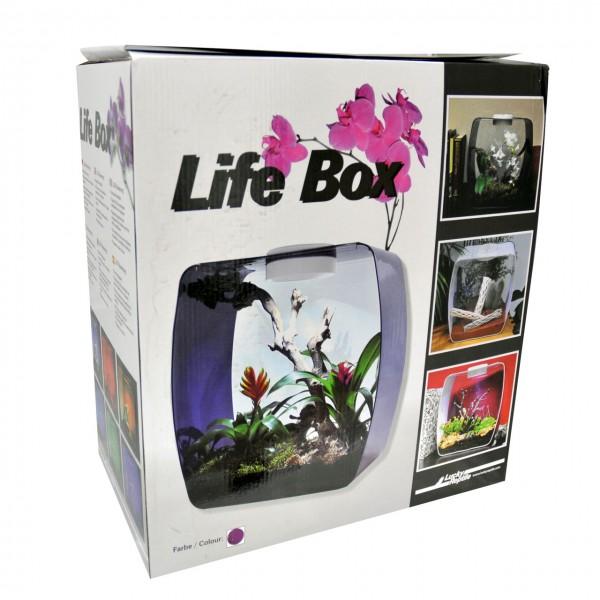Lucky Reptile Life Box