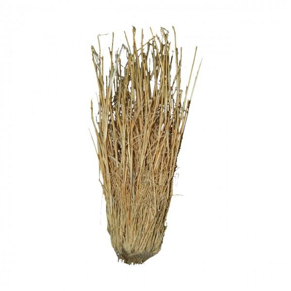 Grass Bushes